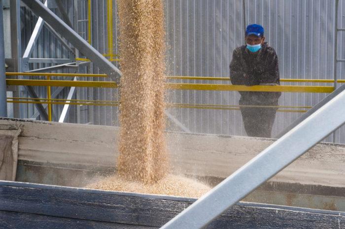 Оренбургские аграрии намолотили первый миллион тонн зерна
