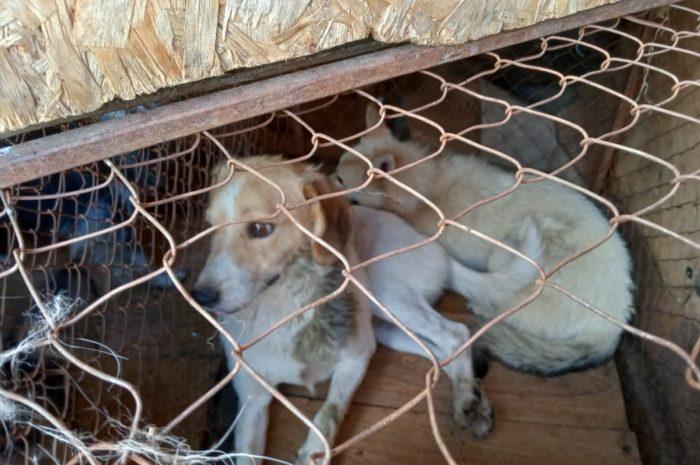 43 безнадзорные собаки забрали на передержку