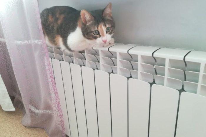 Даешь тепло в дома